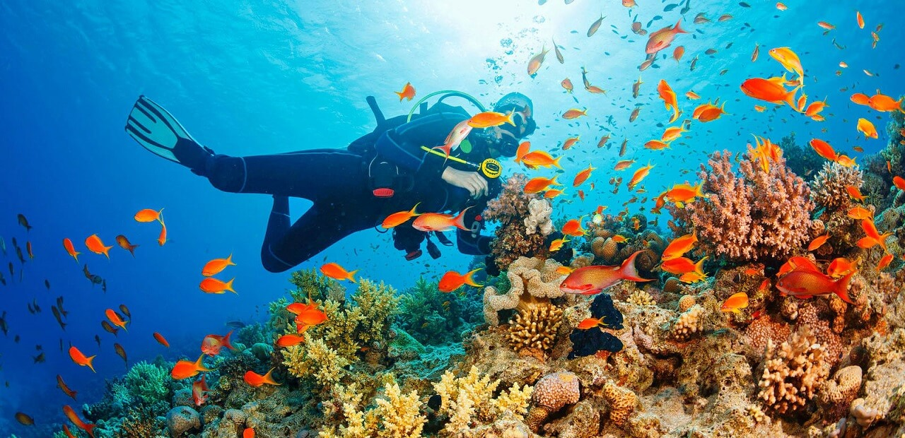 scuba diving andaman nicobar